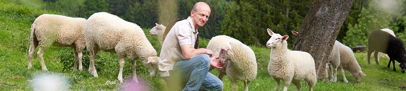 Käse vom Schaf